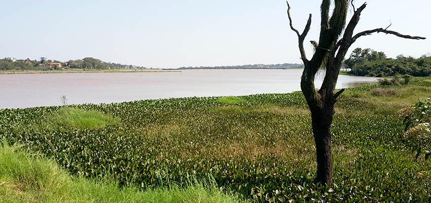 Foto del rio con un árbol en el primer plano